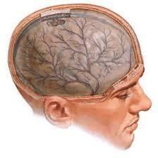 vegetative dystonia symptoms