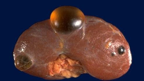 Кабинет по лечению стоматита у детей