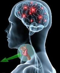 Симптомы заболеваний щитовидной железы у женщин и мужчин