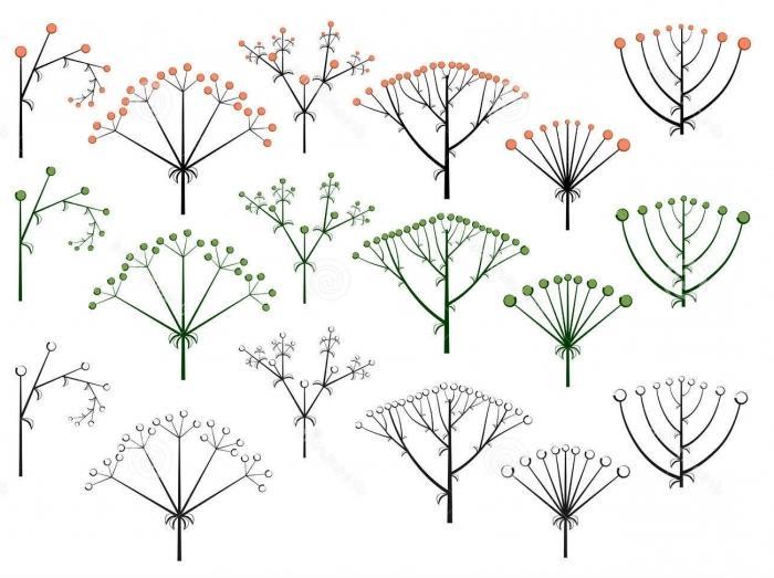 Строение цветка растений