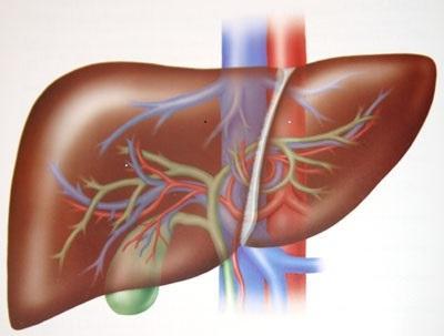 Dubuzh liver