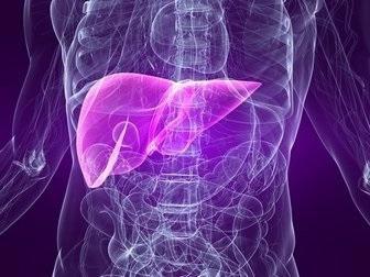 Dubazh liver magnesia