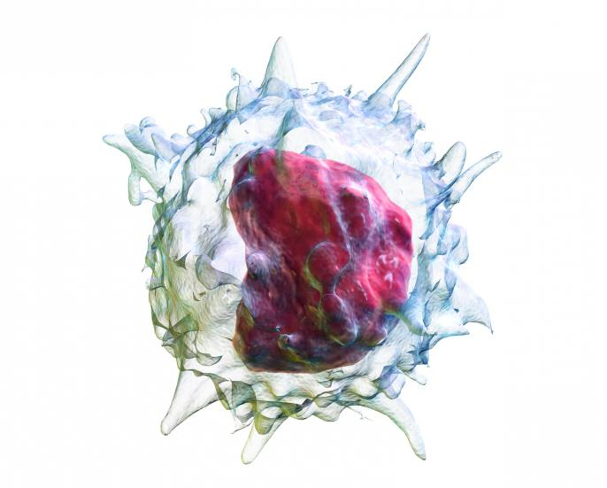 monocytes in the blood