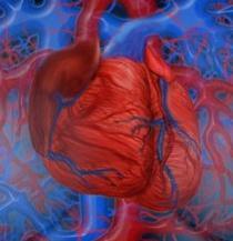 Клапан сердца – значение в организме, виды, протезирование