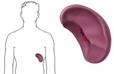 signs of spleen disease