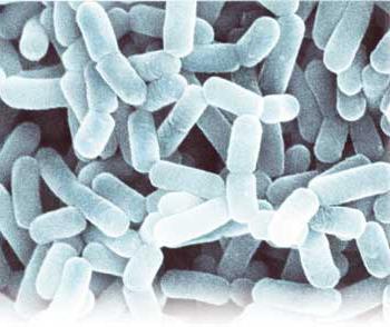 средство кишечных паразитов человека