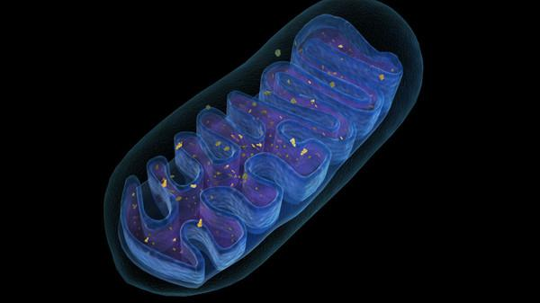 cell structure of a living organism