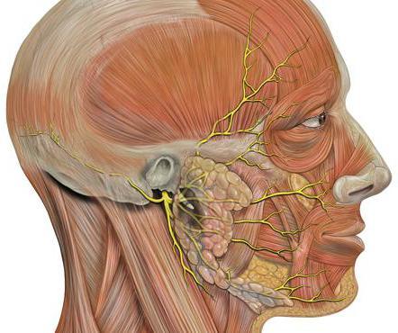 паралич лицевого нерва лечение