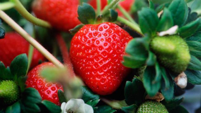 when to put strawberry mustache