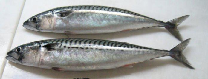 how to cook mackerel
