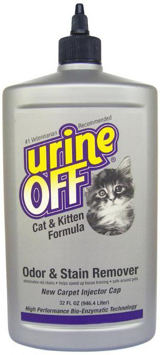 smell of cat urine how to get rid