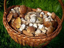 chanterelle mushrooms how to freeze