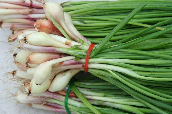 Выращивание лука из бульбочек 55