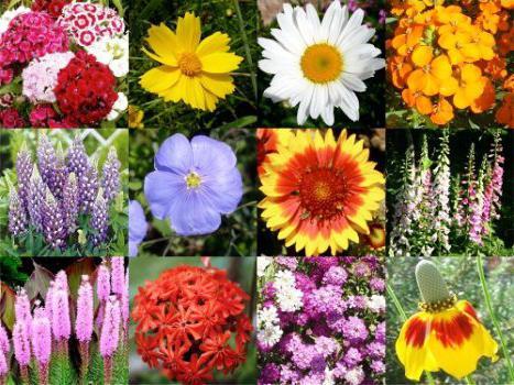 Какие многолетние цветы можно посадить дома