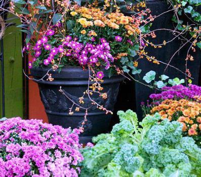 Посадка многолетних цветов семенами осенью