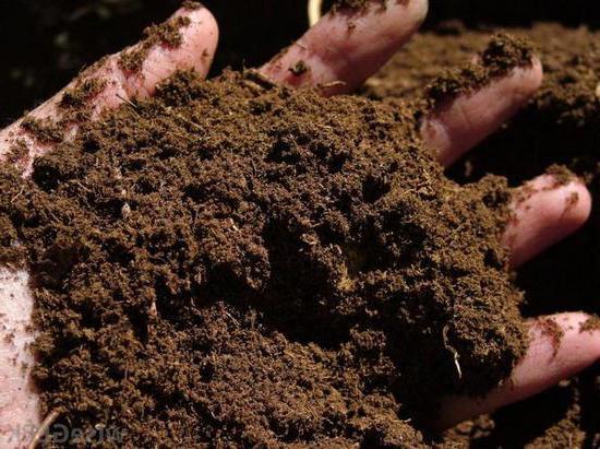 peat organic fertilizer