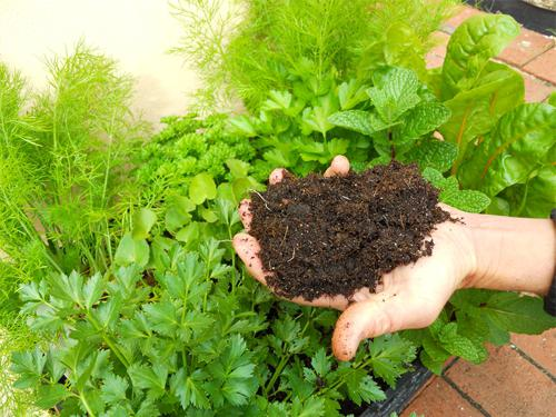 use of peat for fertilizer