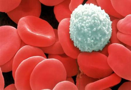 уровень лейкоцитов