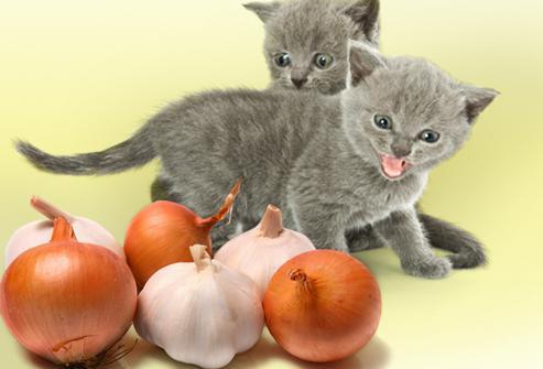 Запахи отпугивающие кошек