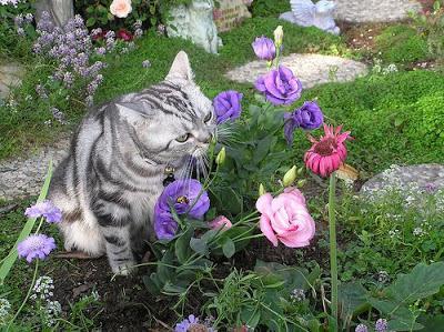 Как кошка анализирует запахи