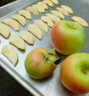 замораживают ли яблоки