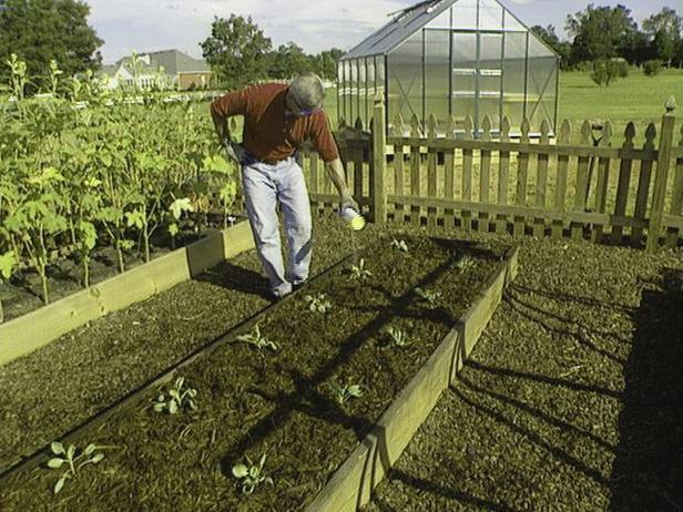 Сингониумуход и выращивание 92