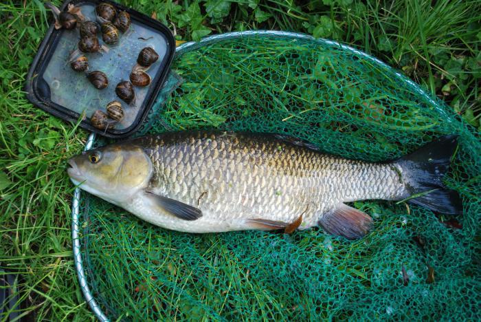 когда ловится рыба летом
