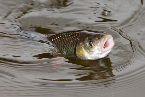 рыбалка прикормка отзывы