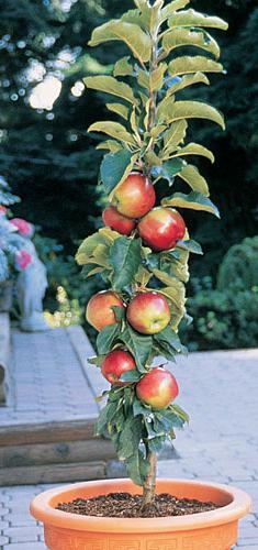 Colonid Apple Care
