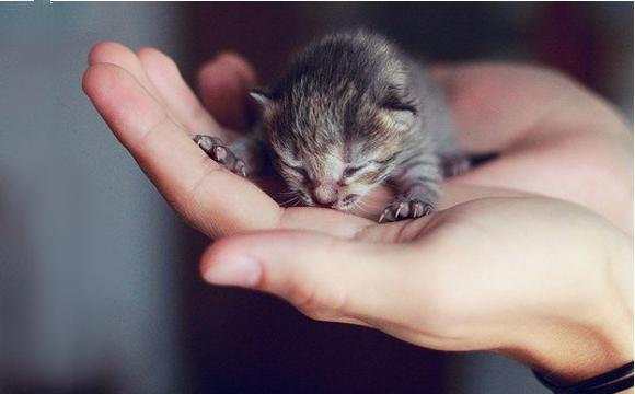 how to leave a newborn kitten