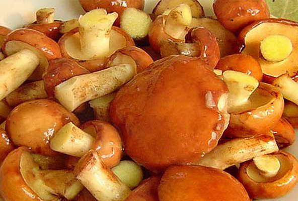Как делать грибную икру? Грибная икра на зиму: рецепт, фото :: SYL.ru