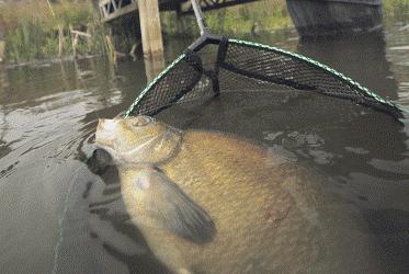 донная снасть для ловли толстолоба на течении