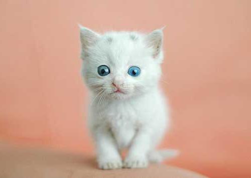 у котенка аллергия что делать