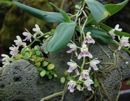 Орхидеи в природе в россии