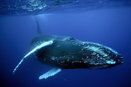 the biggest sea animal