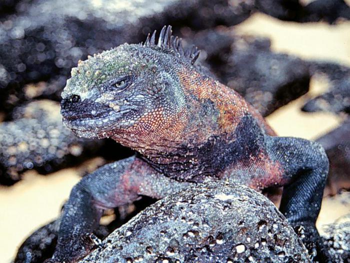sea animals photos