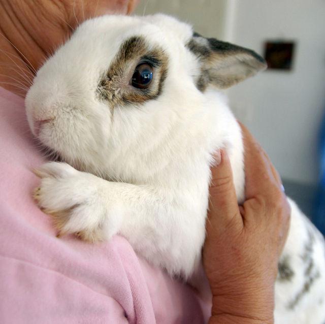 Домашние кролики декоративные уход в домашних условиях