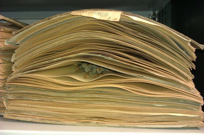 титульный лист гербария