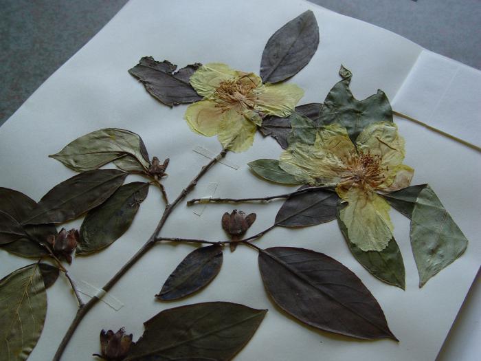 гербарий из листьев