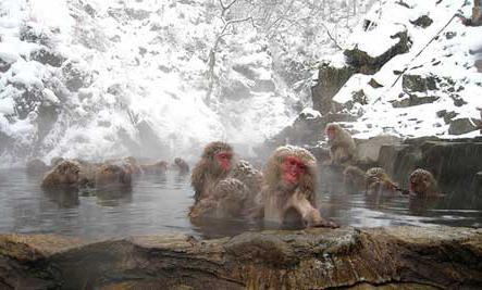 japan sights photo