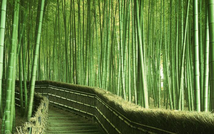 what to see in japan