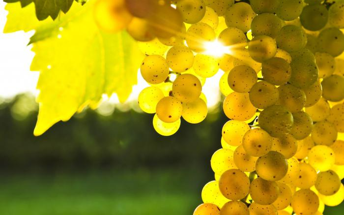 К чему снится черный виноград женщине Сонник