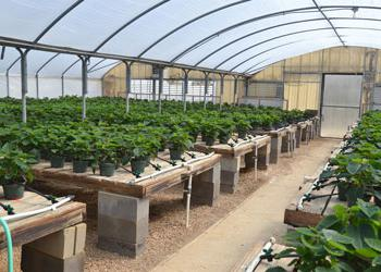 drip irrigation greenhouses with their own hands