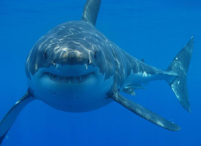Самых страшных акул - InfoNIAC ru