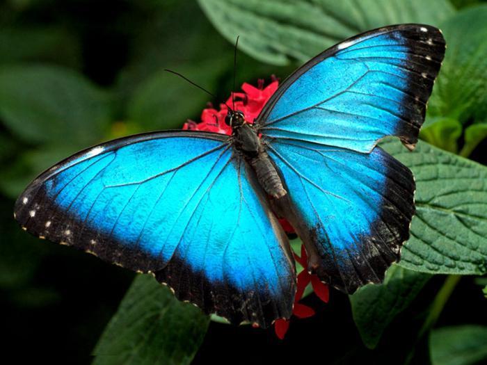 why dream big butterflies