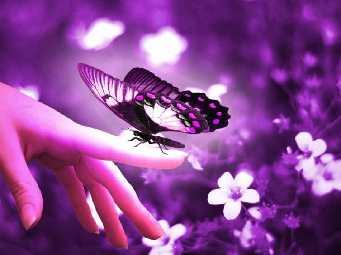 what dreams a butterfly