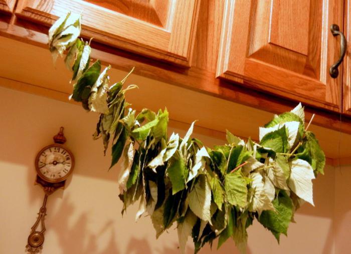листья малины свойства