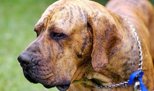 Опасных пород собак для человека