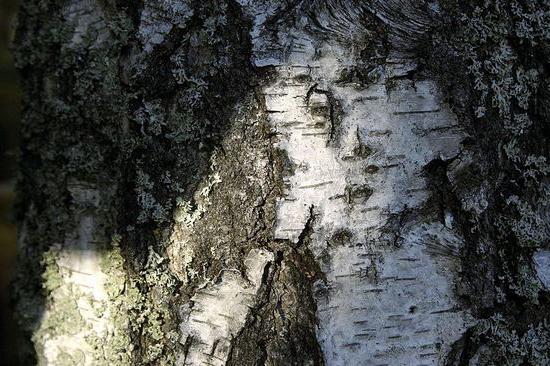 birch hanging description