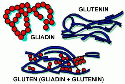 gluten what is it